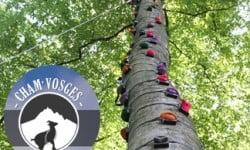 escalade et accrobranche à La Bresse avec Cham'Vosges Aventures