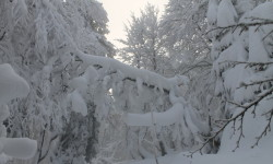 Forêt des Trois Fours