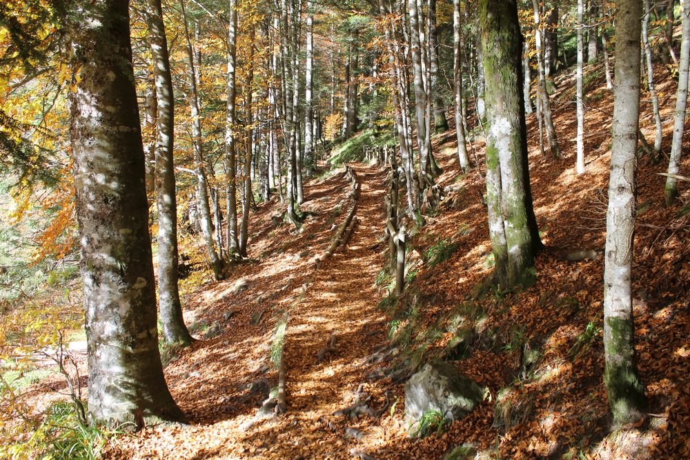Sentier de randonnée familale