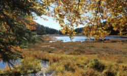 Tourbière en automne