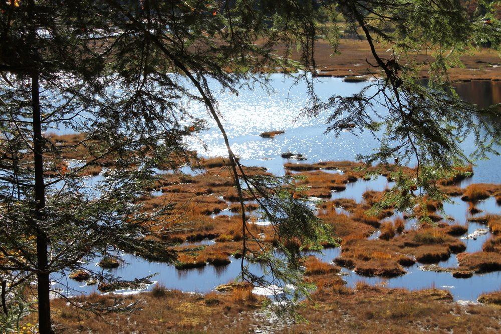 Lac tourbière à La Lispach (lac ouvert au public)