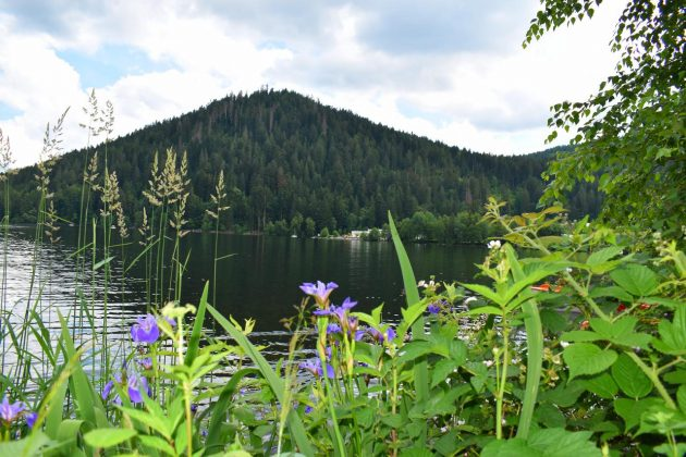 flore lac de gerardmer